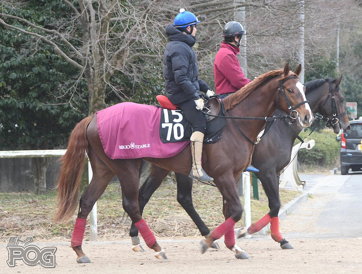 ギラーミンの馬体写真