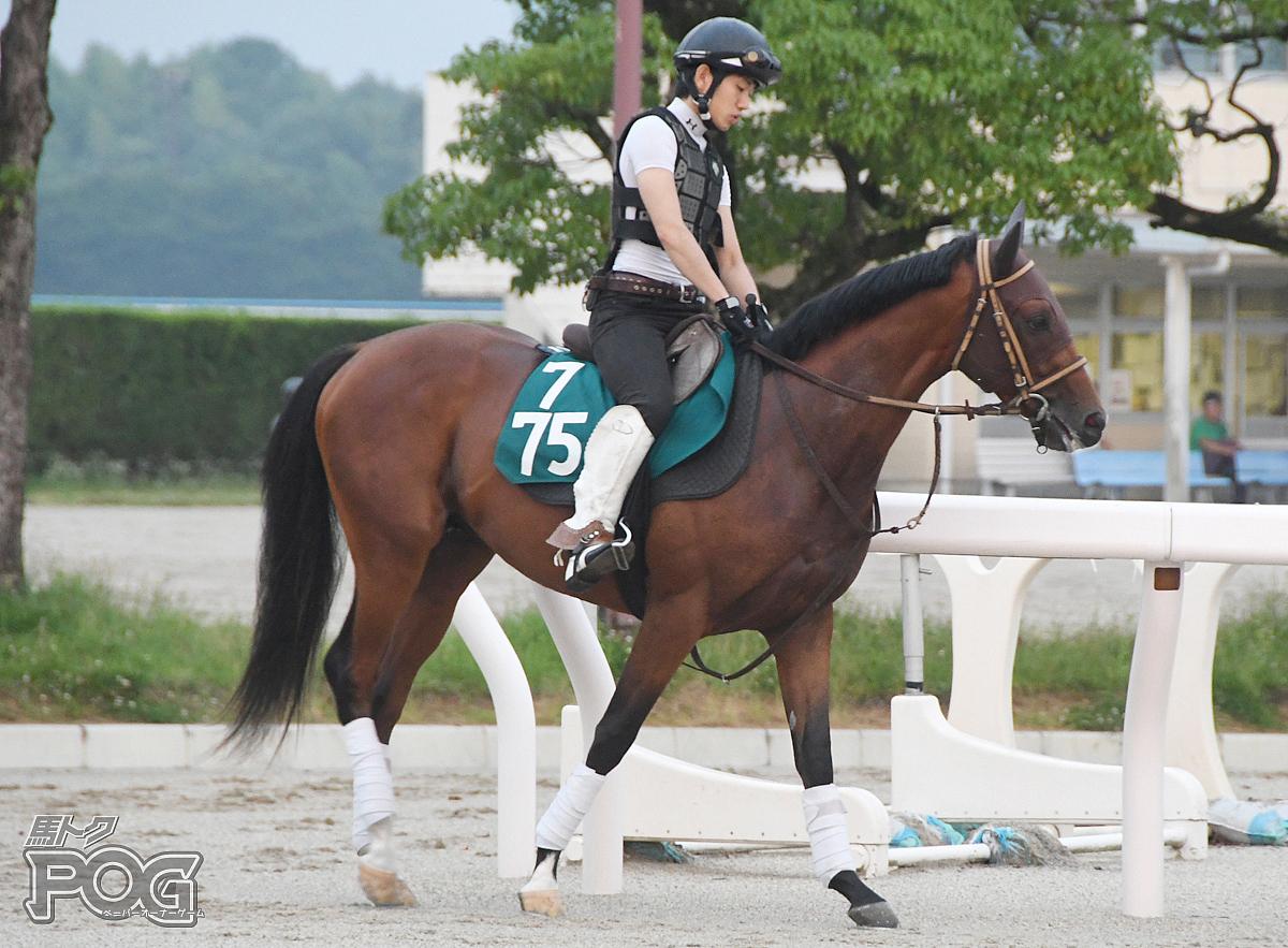 ヒルトップパレスの馬体写真