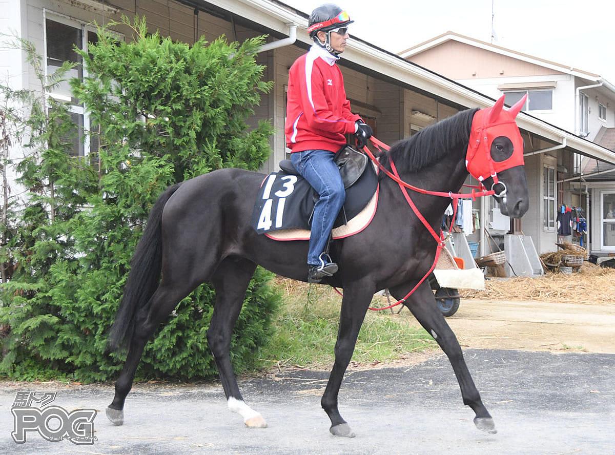 ヒロノオウカンの馬体写真