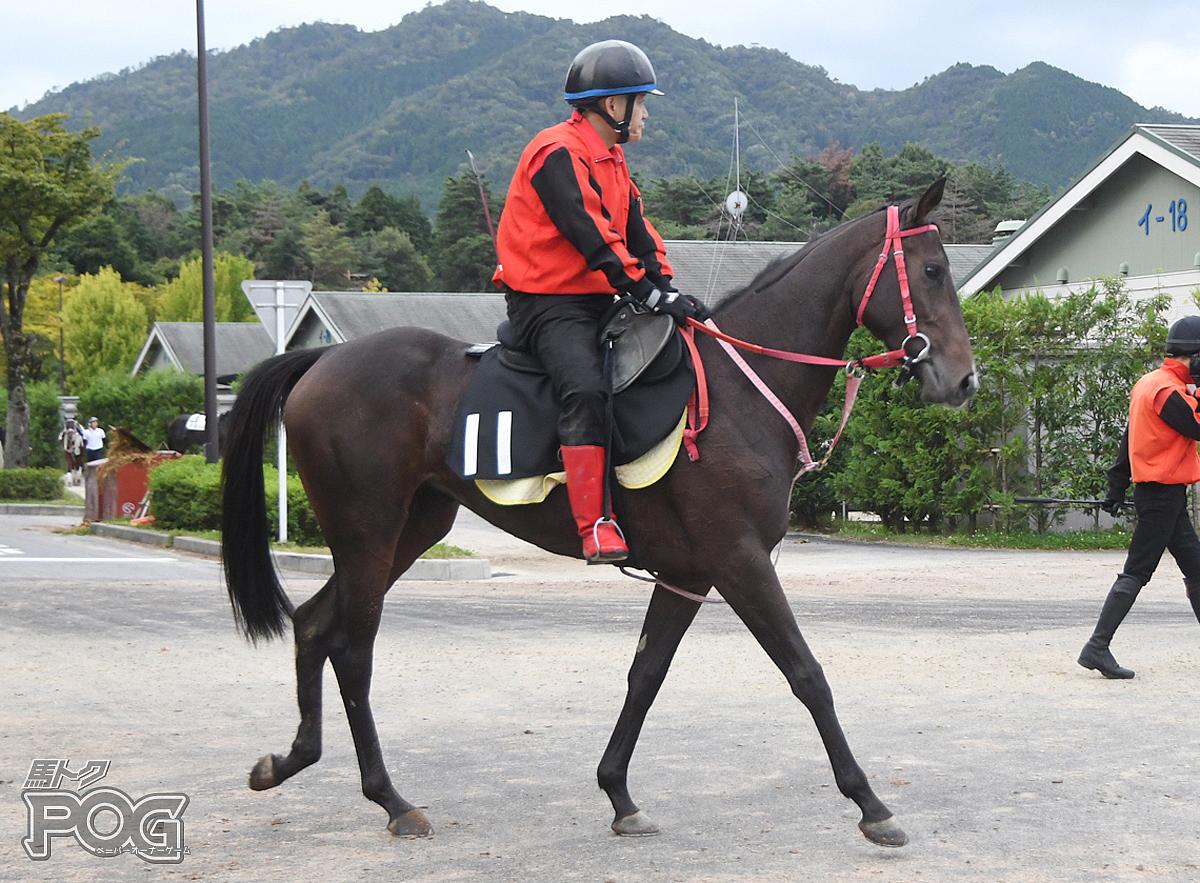アイファーヒナタの馬体写真