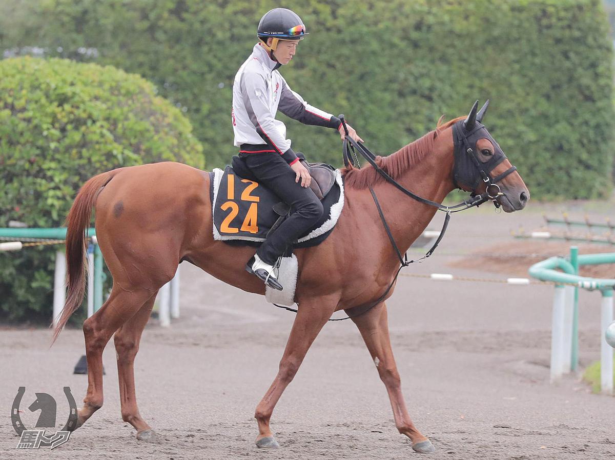 ミックベンハーの馬体写真