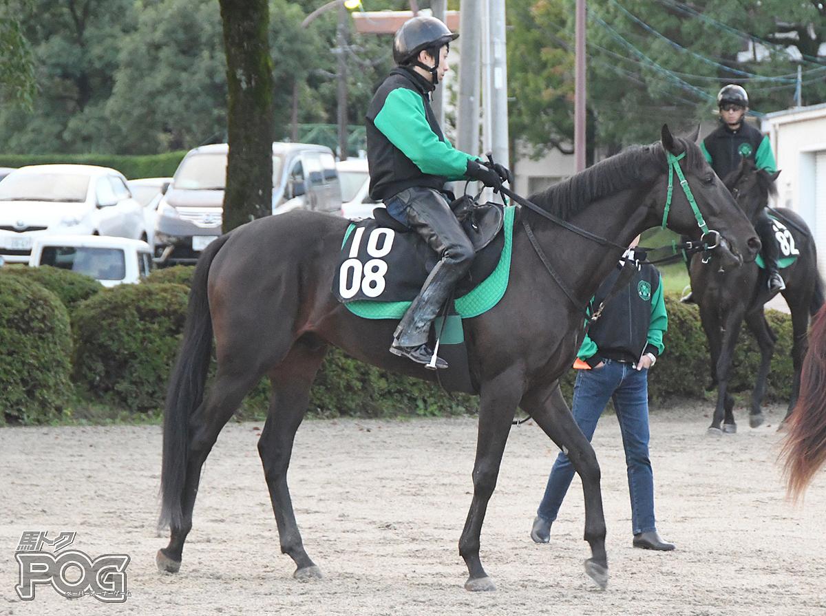 ミルトジョンの馬体写真