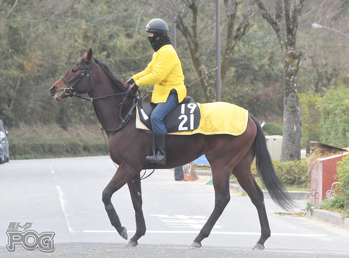 ホジェリアアスールの馬体写真