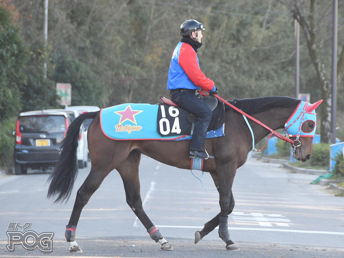 ウエスタンヒューズの馬体写真
