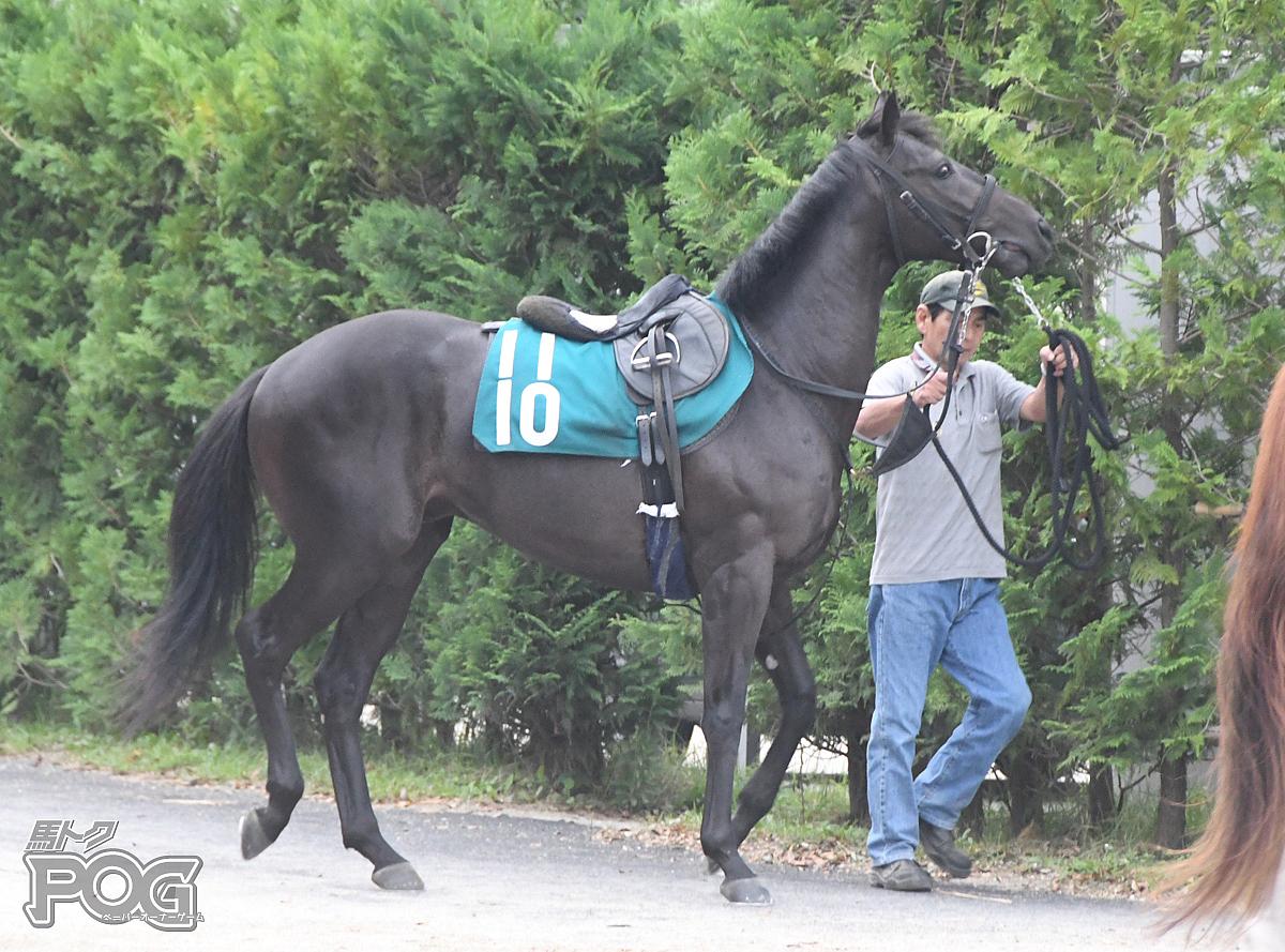 ユーデモニクスの馬体写真