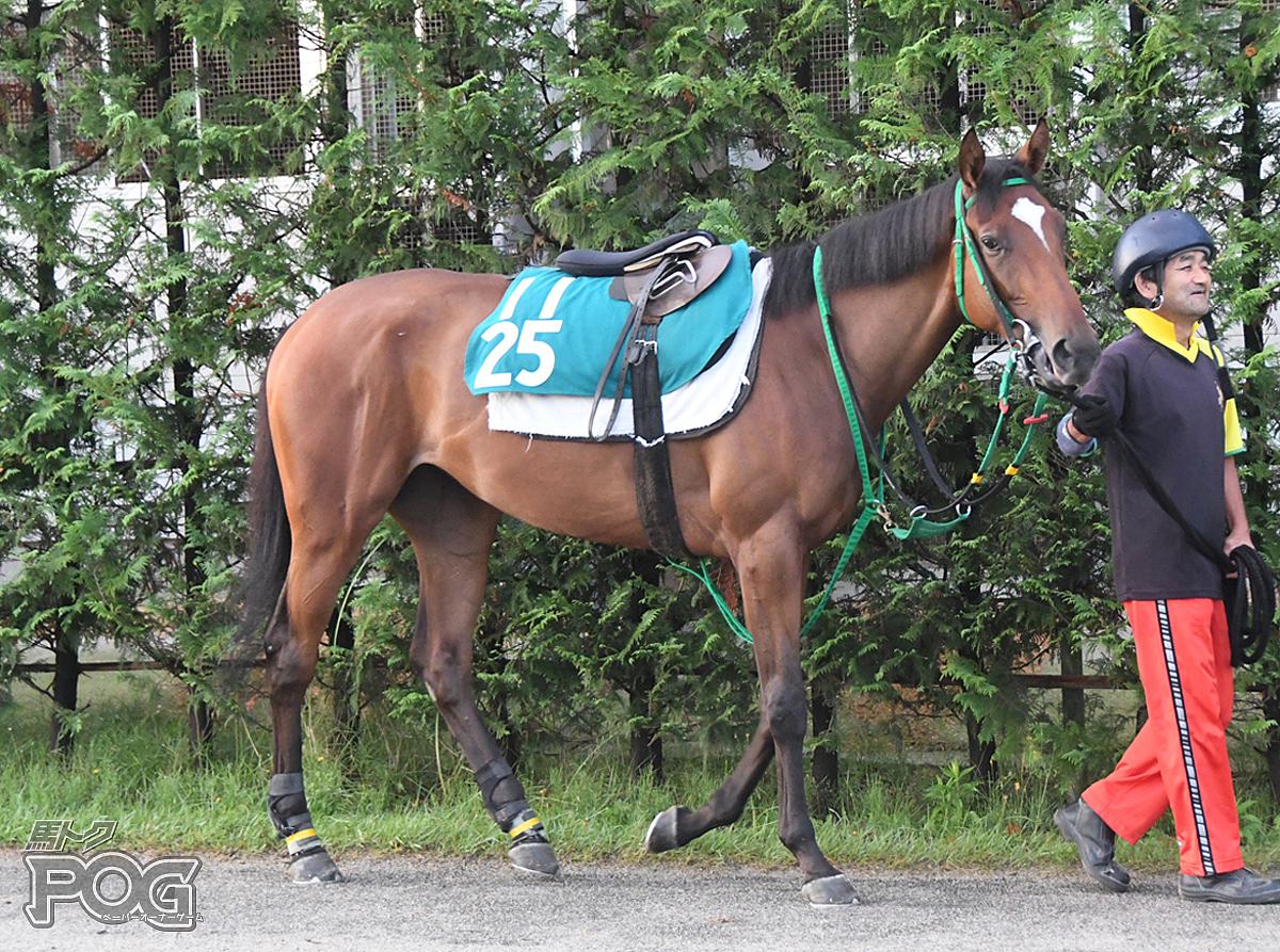 ウエスタンマリーヤの馬体写真