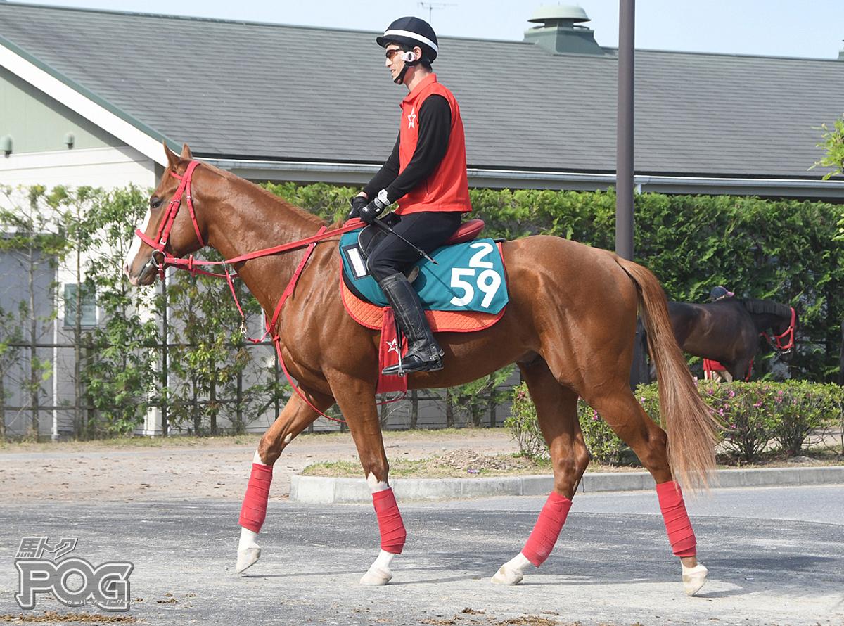 ビーヴェローチェの馬体写真