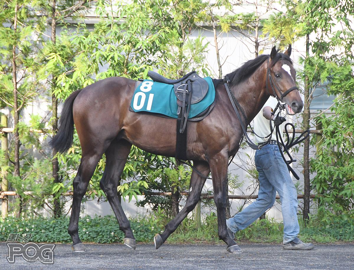 シゲルゴボウの馬体写真