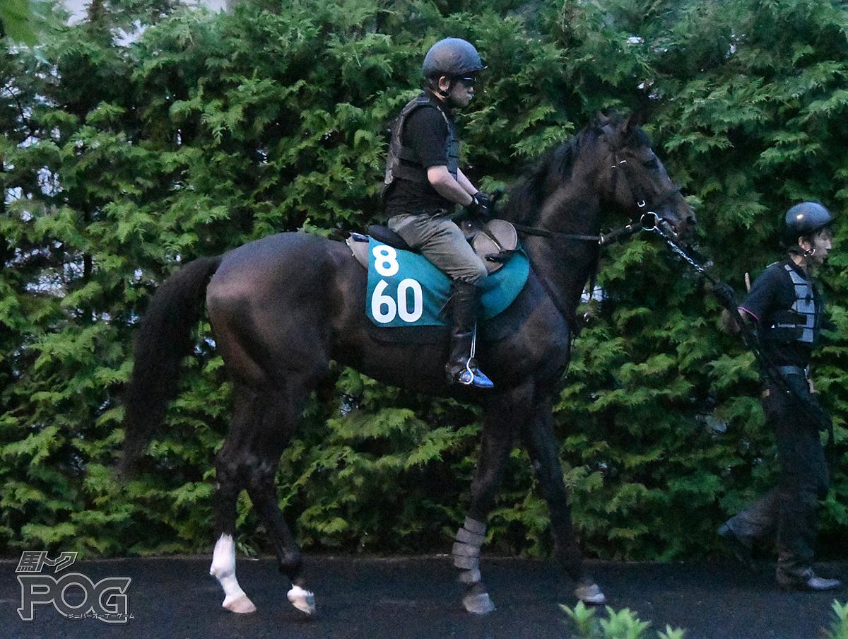 イリオンの馬体写真