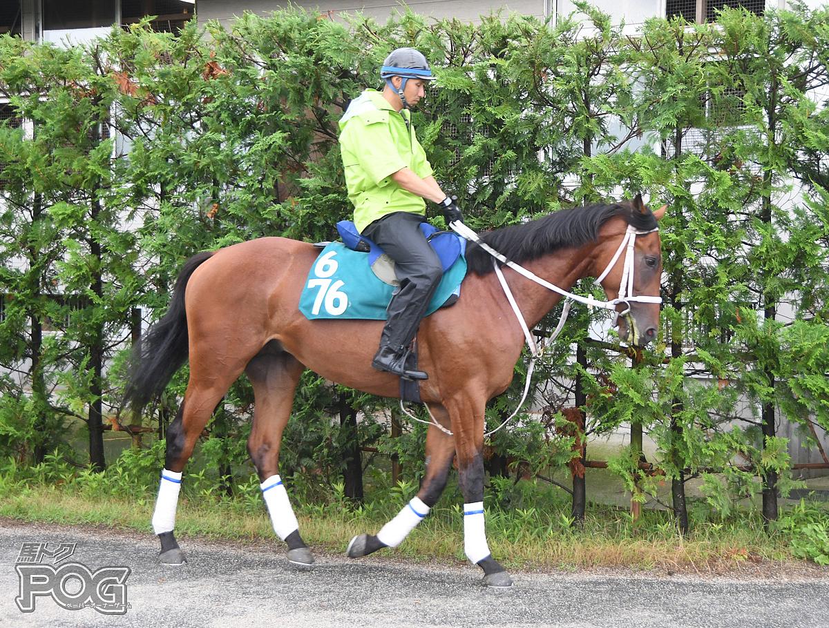 ヴィアプライドの馬体写真
