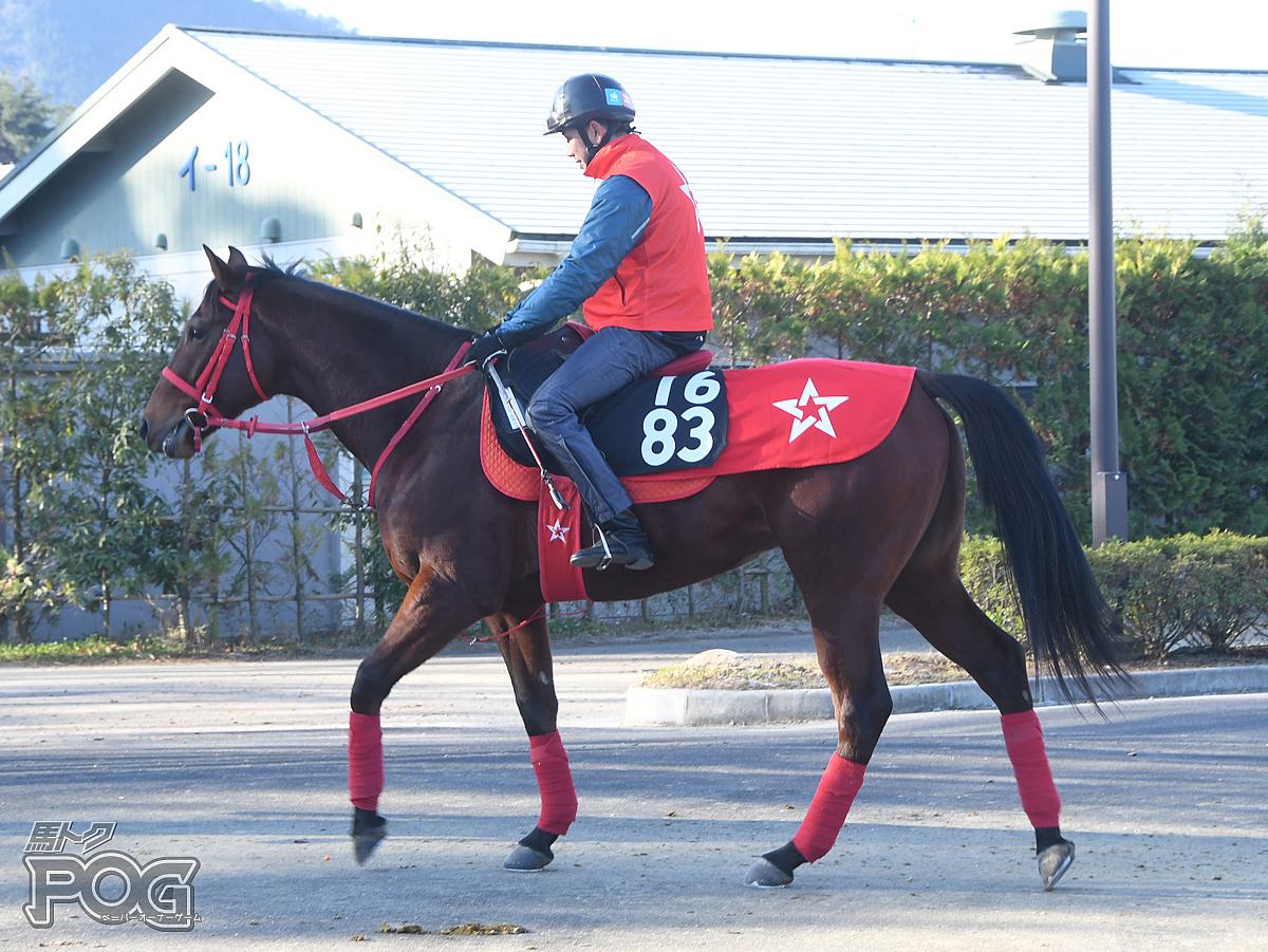 アインツェルカンプの馬体写真