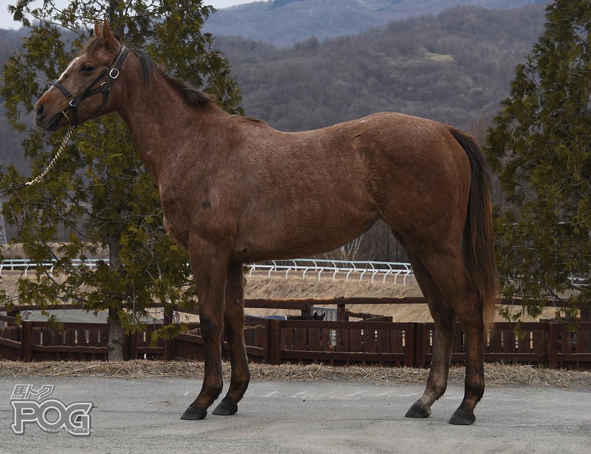 ルーチェソラーレの馬体写真