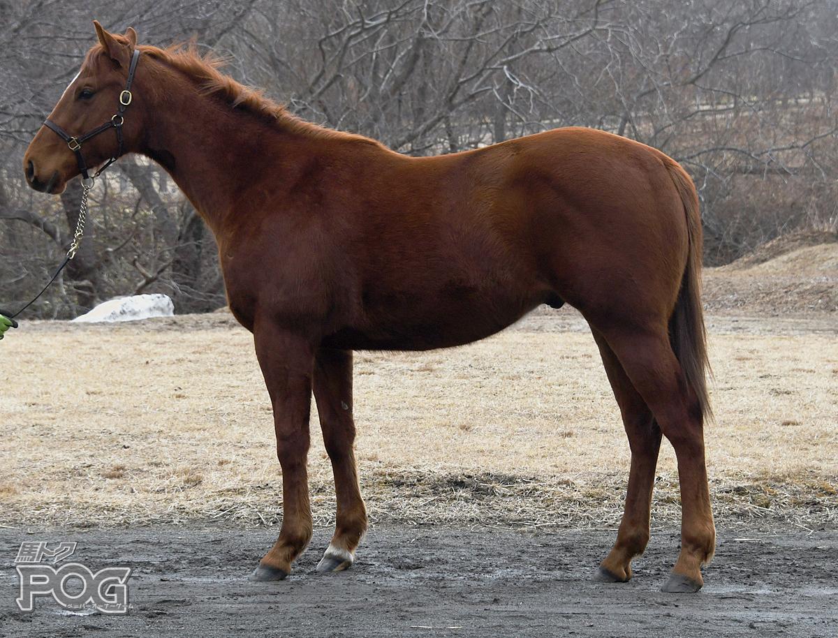 ラフカディオの馬体写真