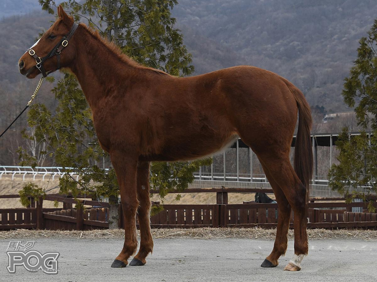 ミラビリアの馬体写真