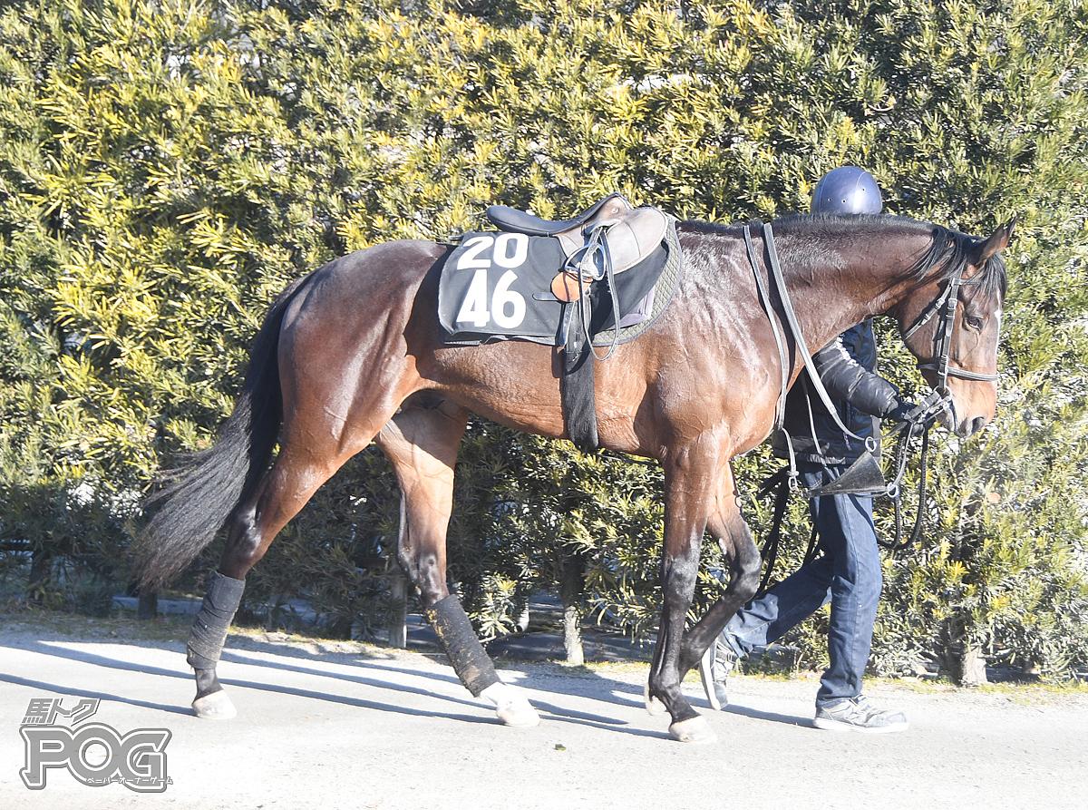 ヴァイスブリッツの馬体写真