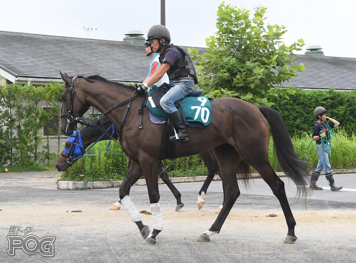 ハイエストクイーンの馬体写真