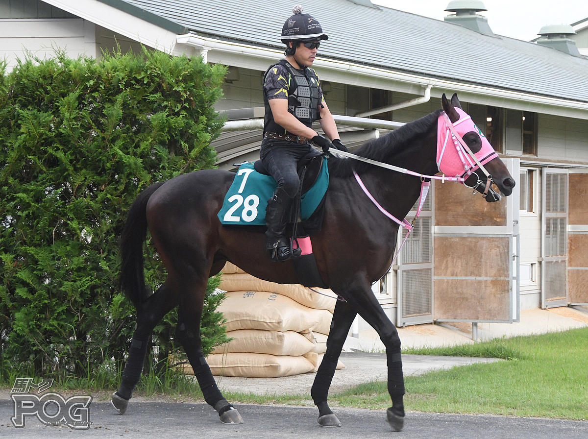 ダンツタイヨウの馬体写真