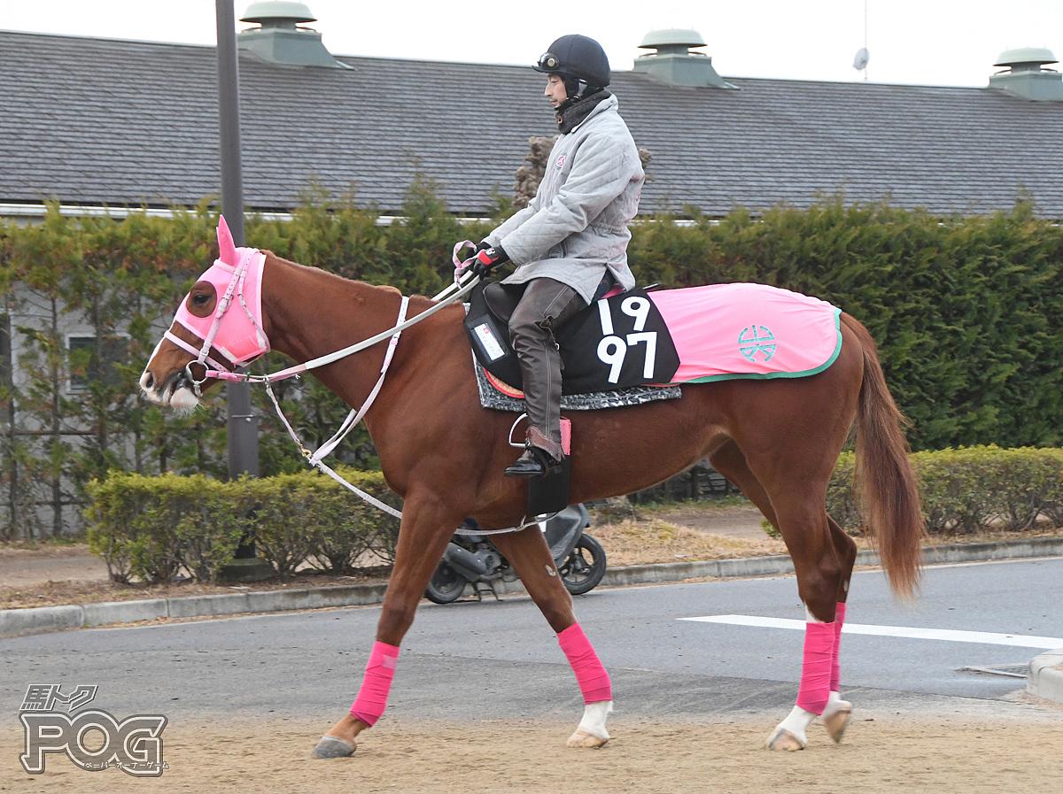 ミストレスメジャーの馬体写真