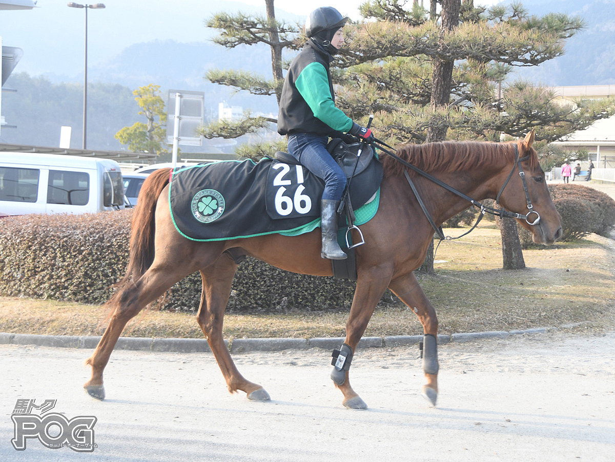 アージェスの馬体写真