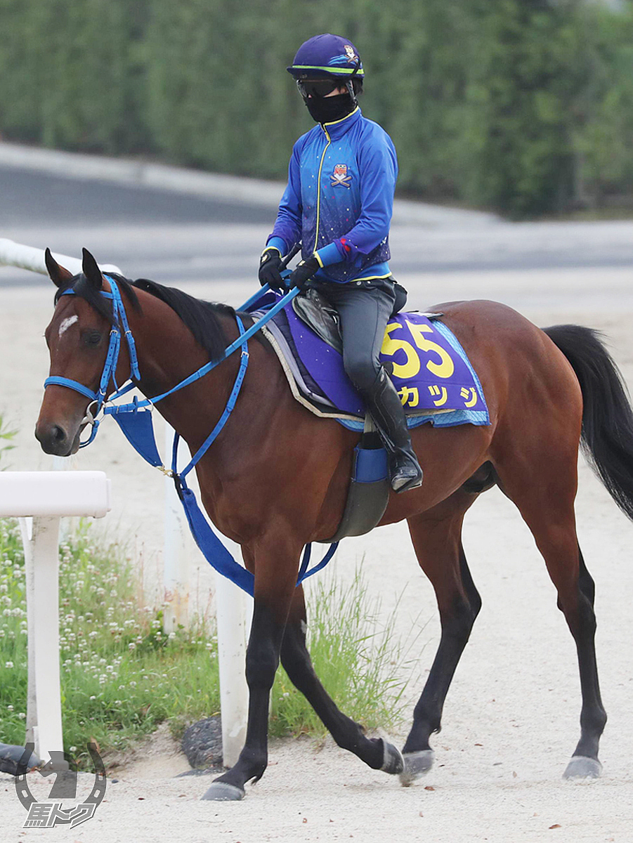 カツジの馬体写真
