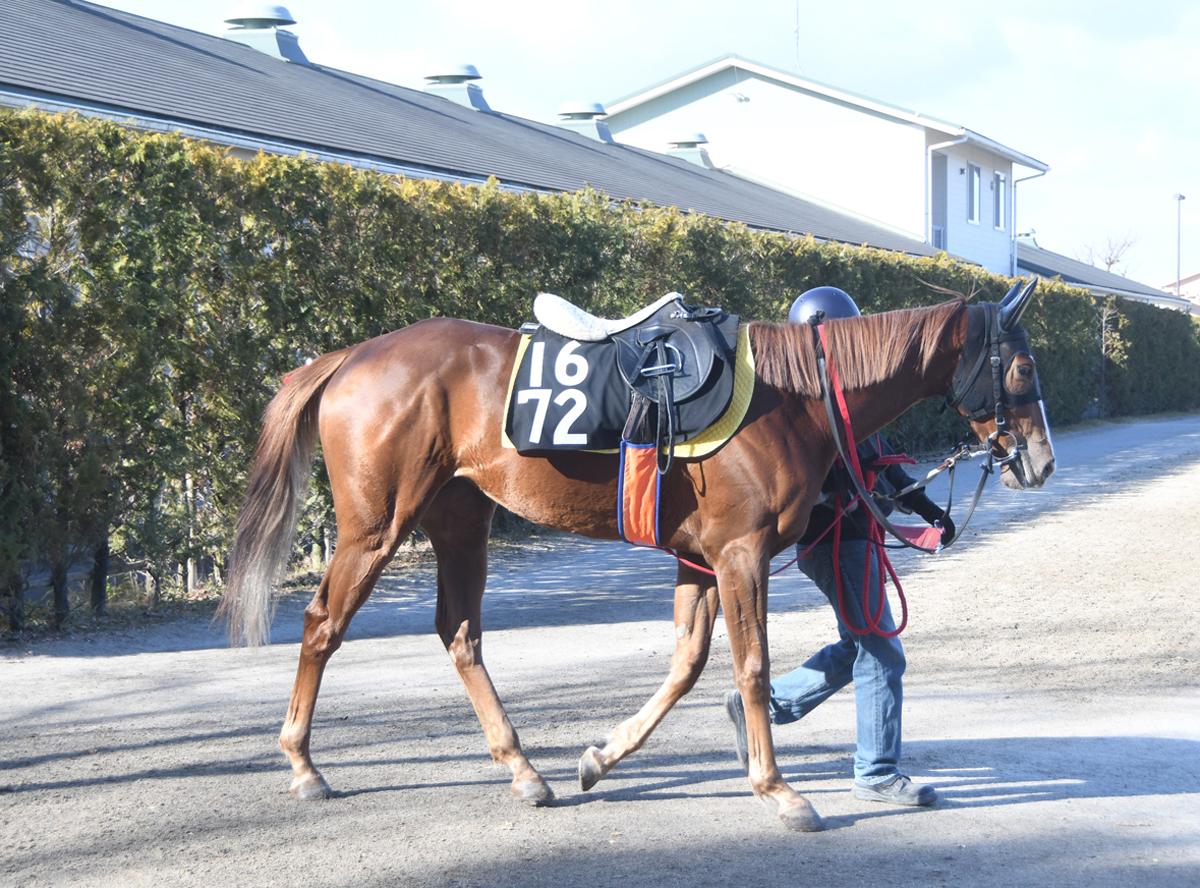 ウインドピトレスクの馬体写真