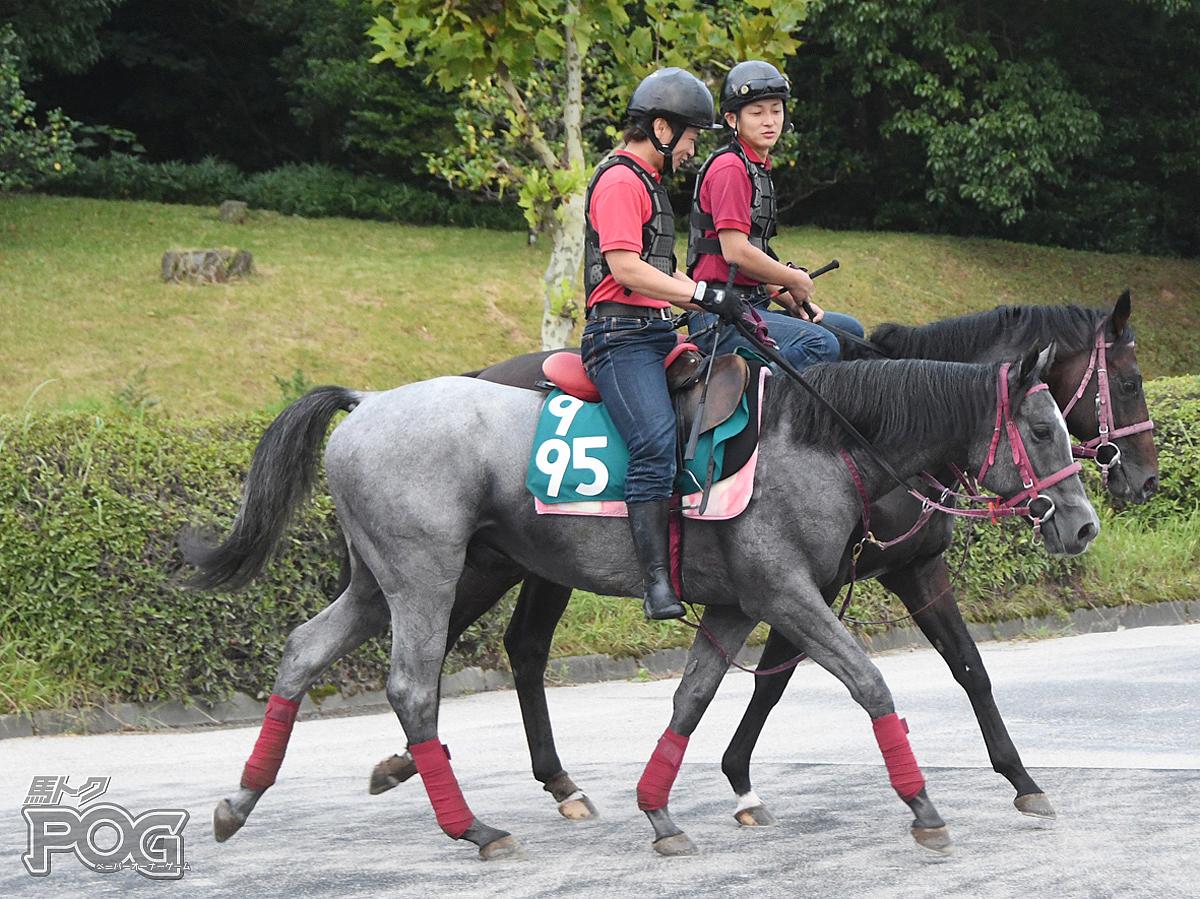 メイドインヘヴンの馬体写真