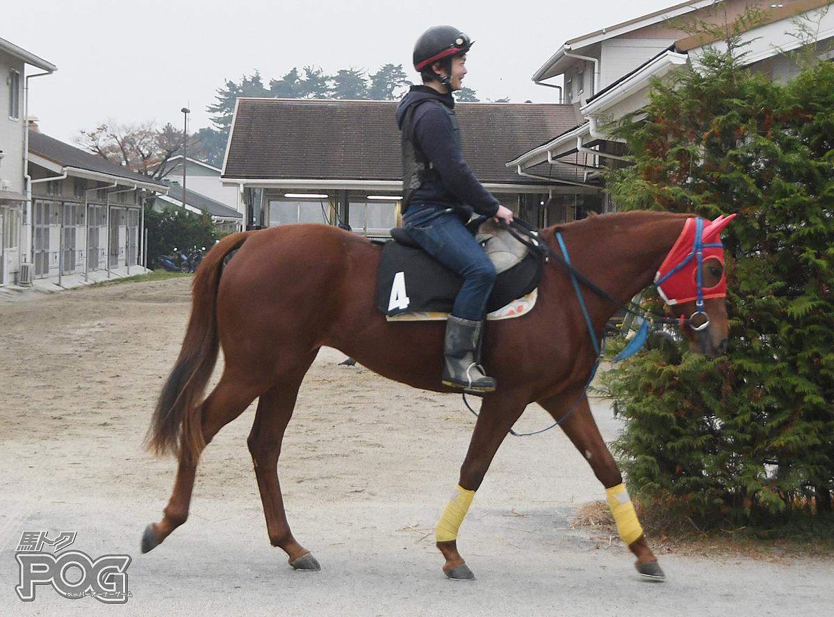 アイスミディの馬体写真