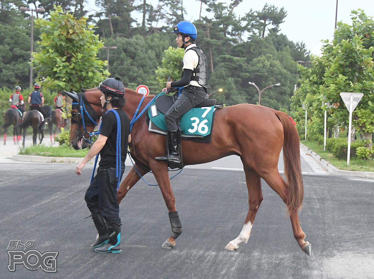 デンコウキングダムの馬体写真