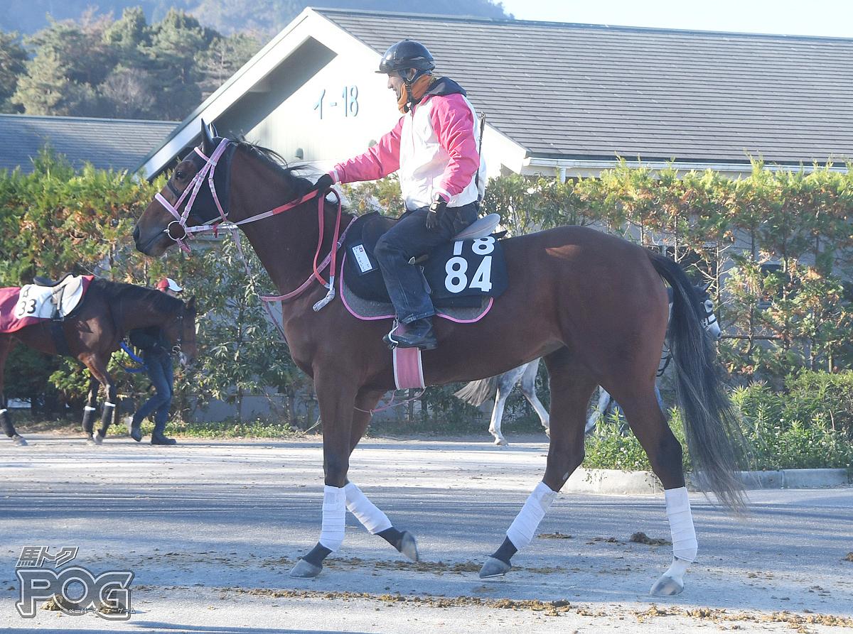 ナリタカピリナの馬体写真