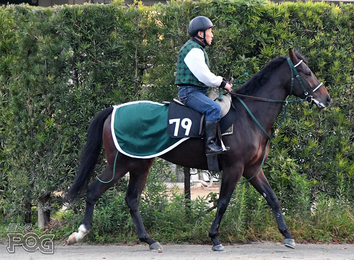 アレーグルの馬体写真