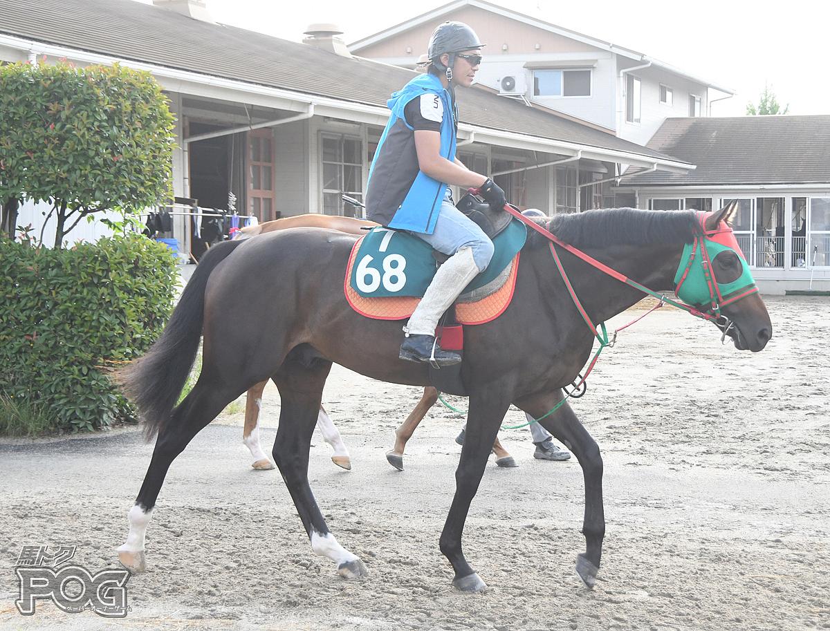 グローリーグローリの馬体写真