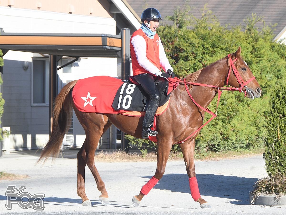 ヴェールレガロの馬体写真