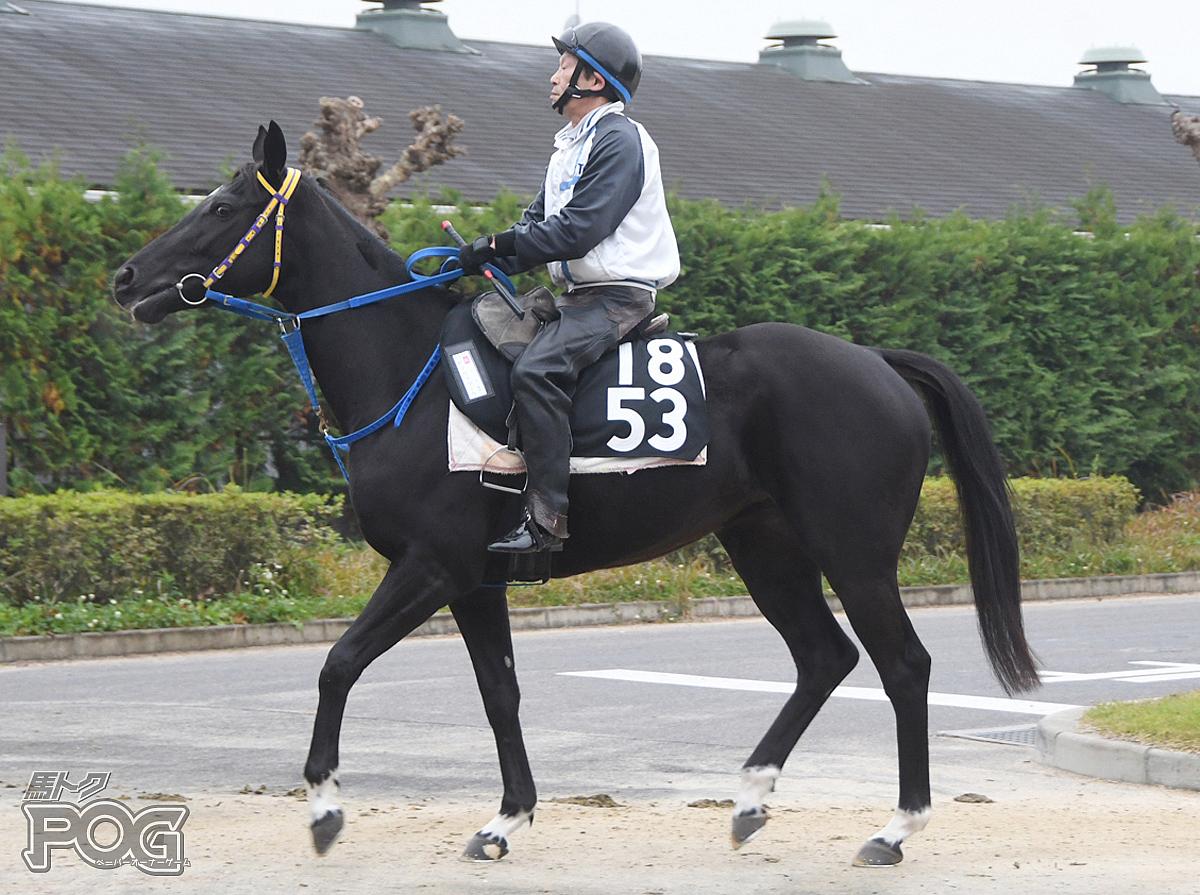 ヤマカツブーケの馬体写真
