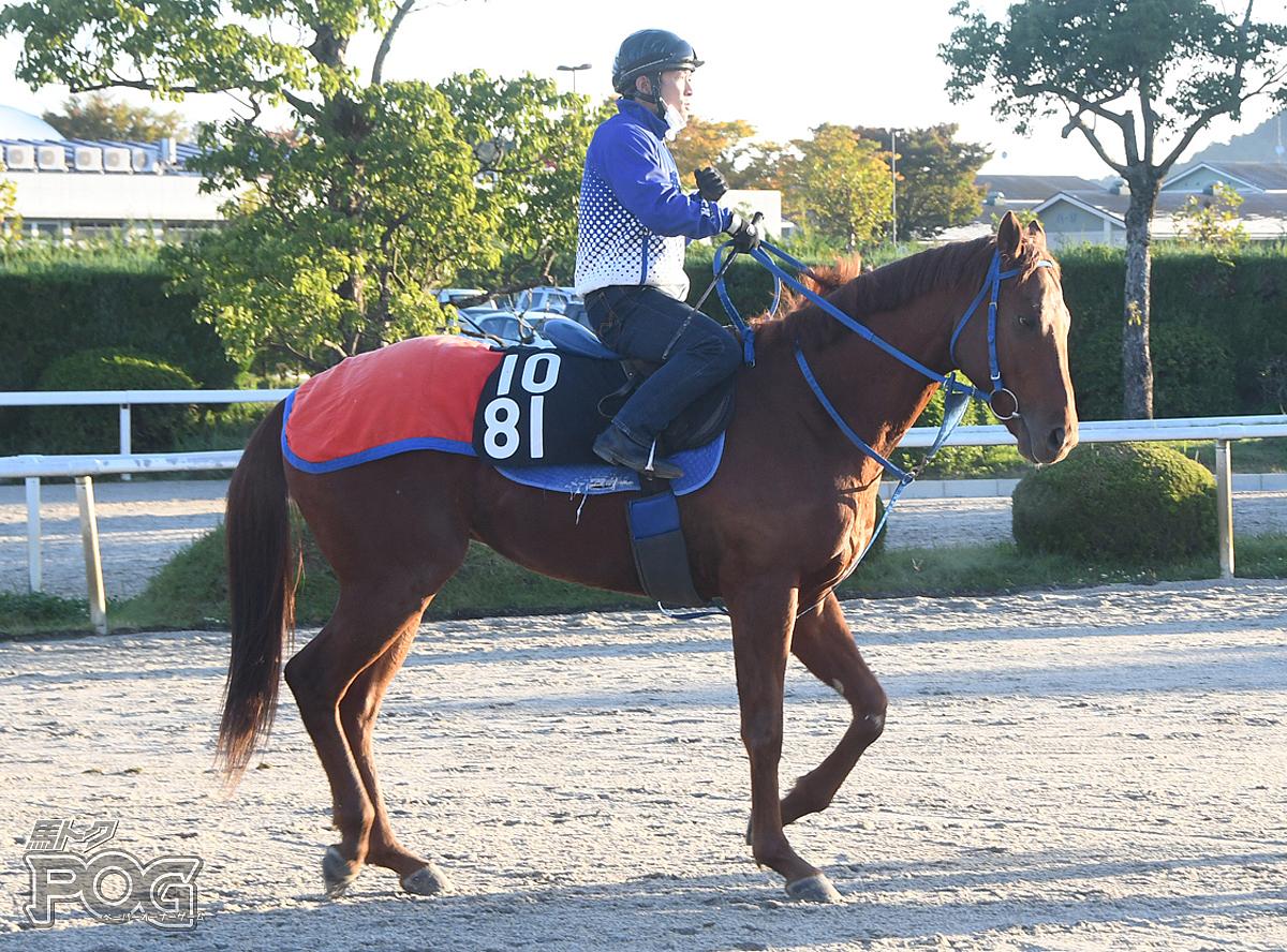 ヤマカツヒーローの馬体写真