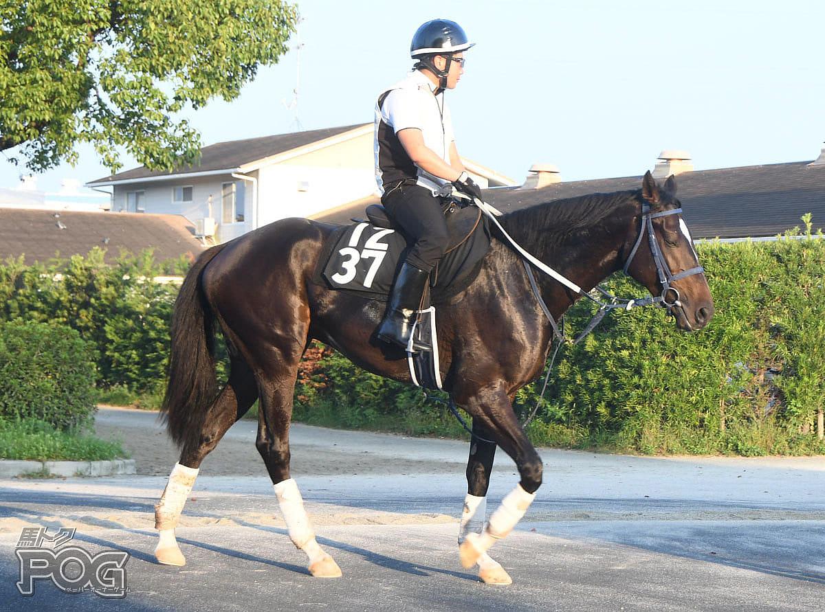 グランサージュの馬体写真