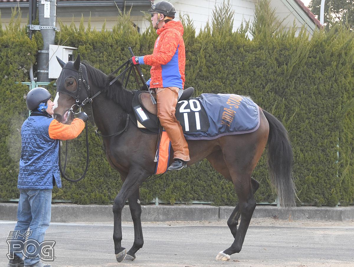 クイーンステッラの馬体写真