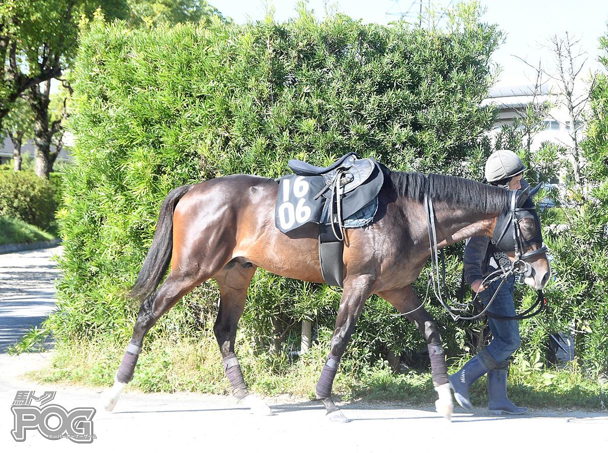 キングオブハーツの馬体写真