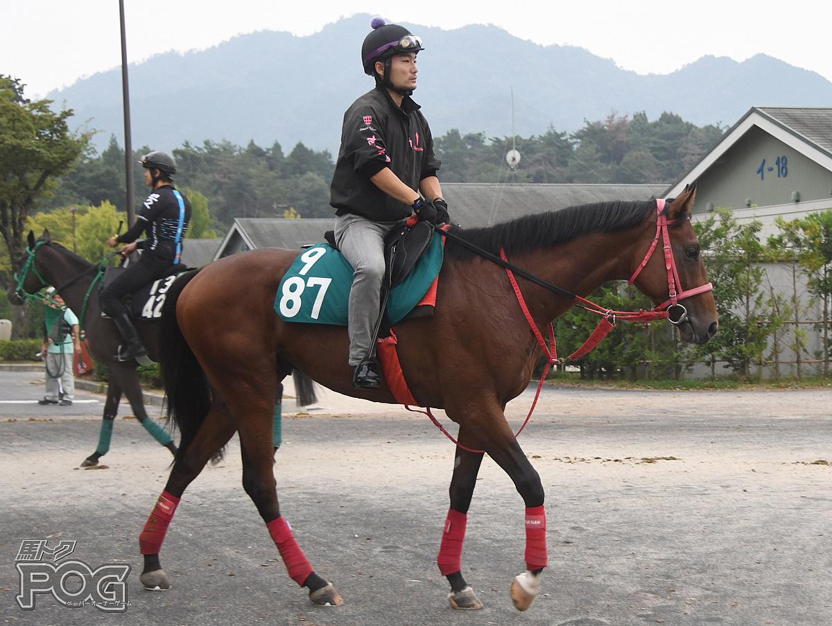 テオゲネスの馬体写真