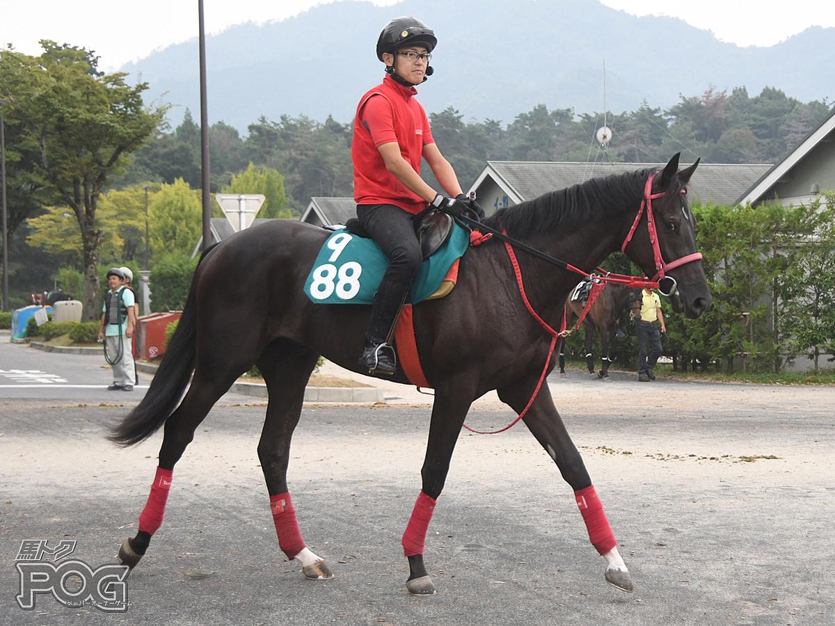 エクスパートランの馬体写真