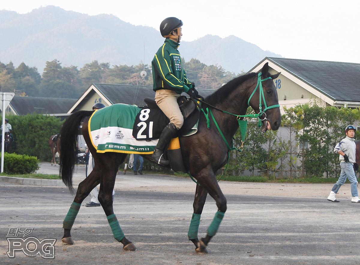 ビストオブバーデンの馬体写真