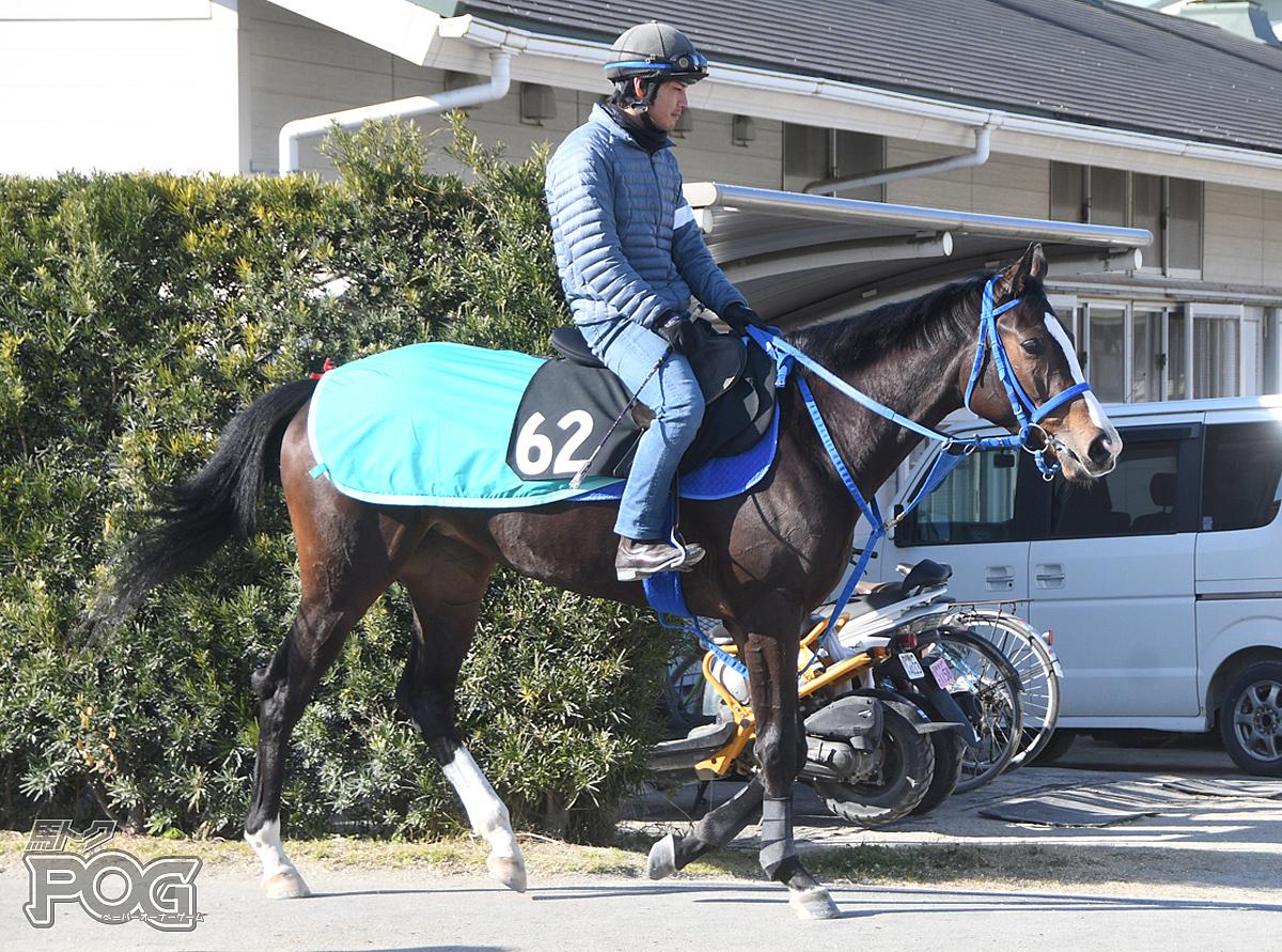 アメージングハートの馬体写真