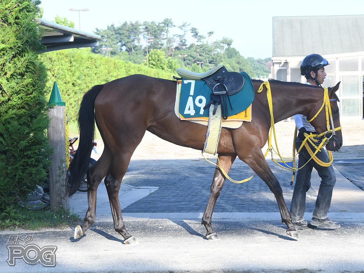 クインズカトレアの馬体写真