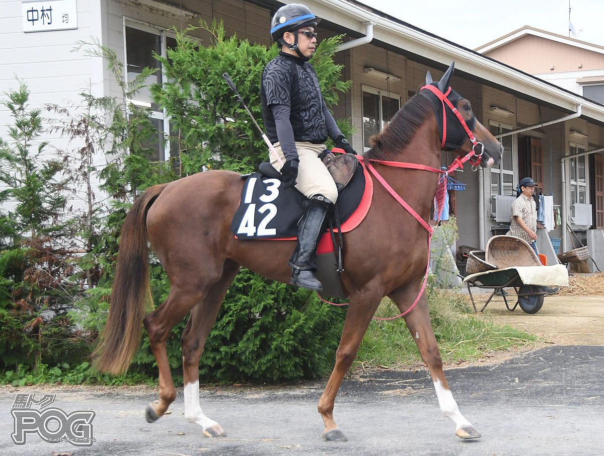 ニホンピロカラスの馬体写真