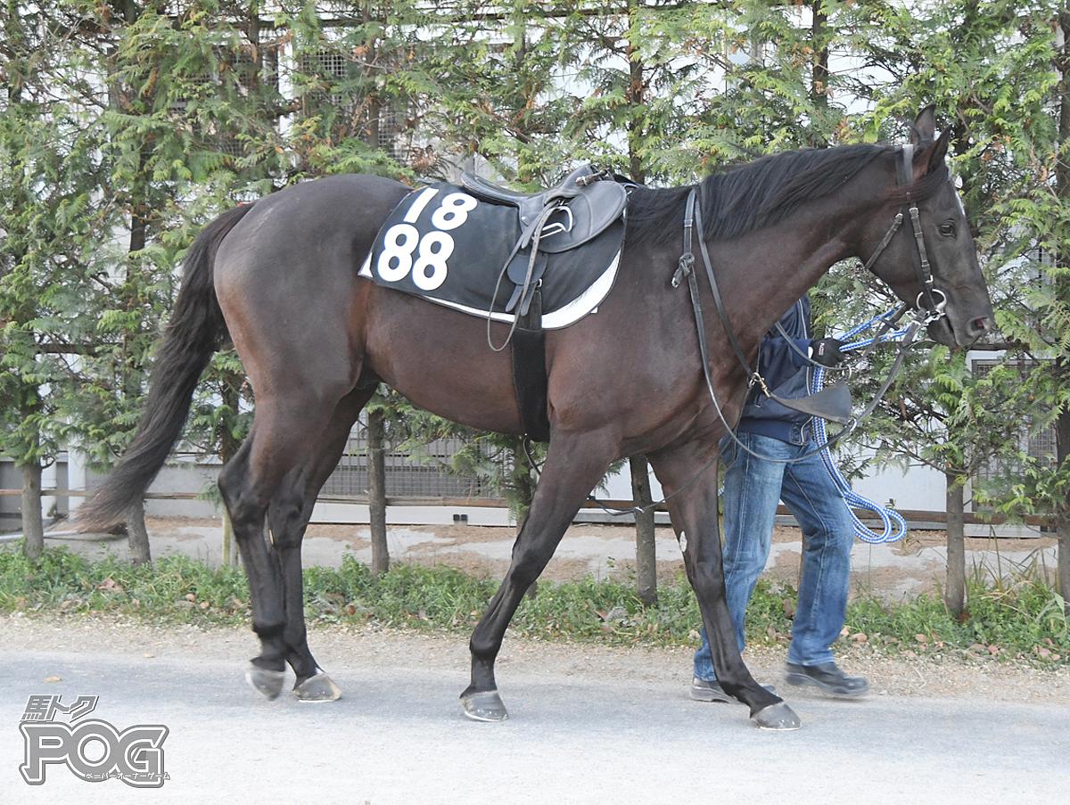 ニホンピロタイドの馬体写真