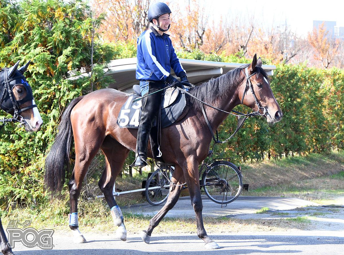 マリアスパンの馬体写真