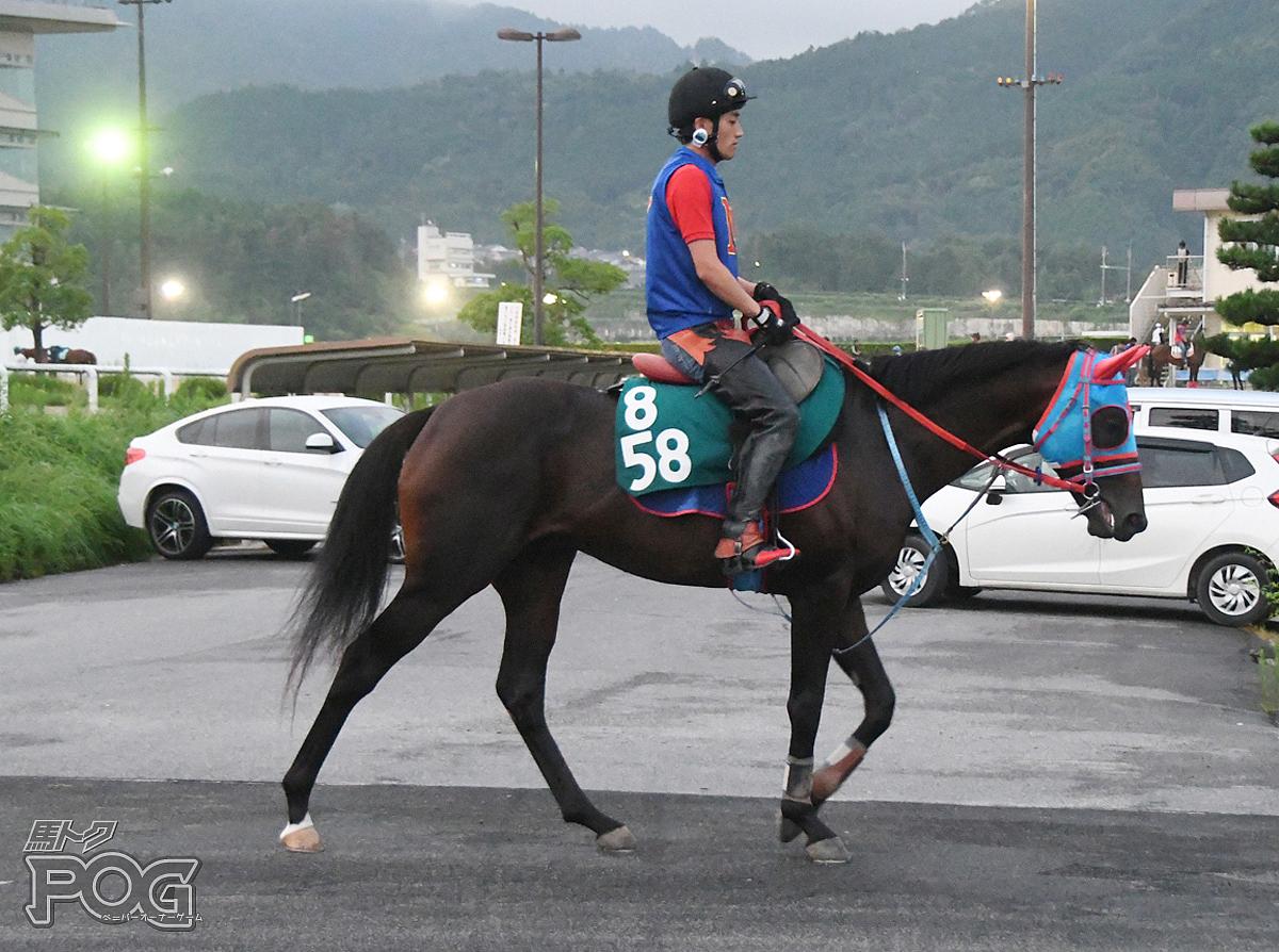 ウインイノベーターの馬体写真
