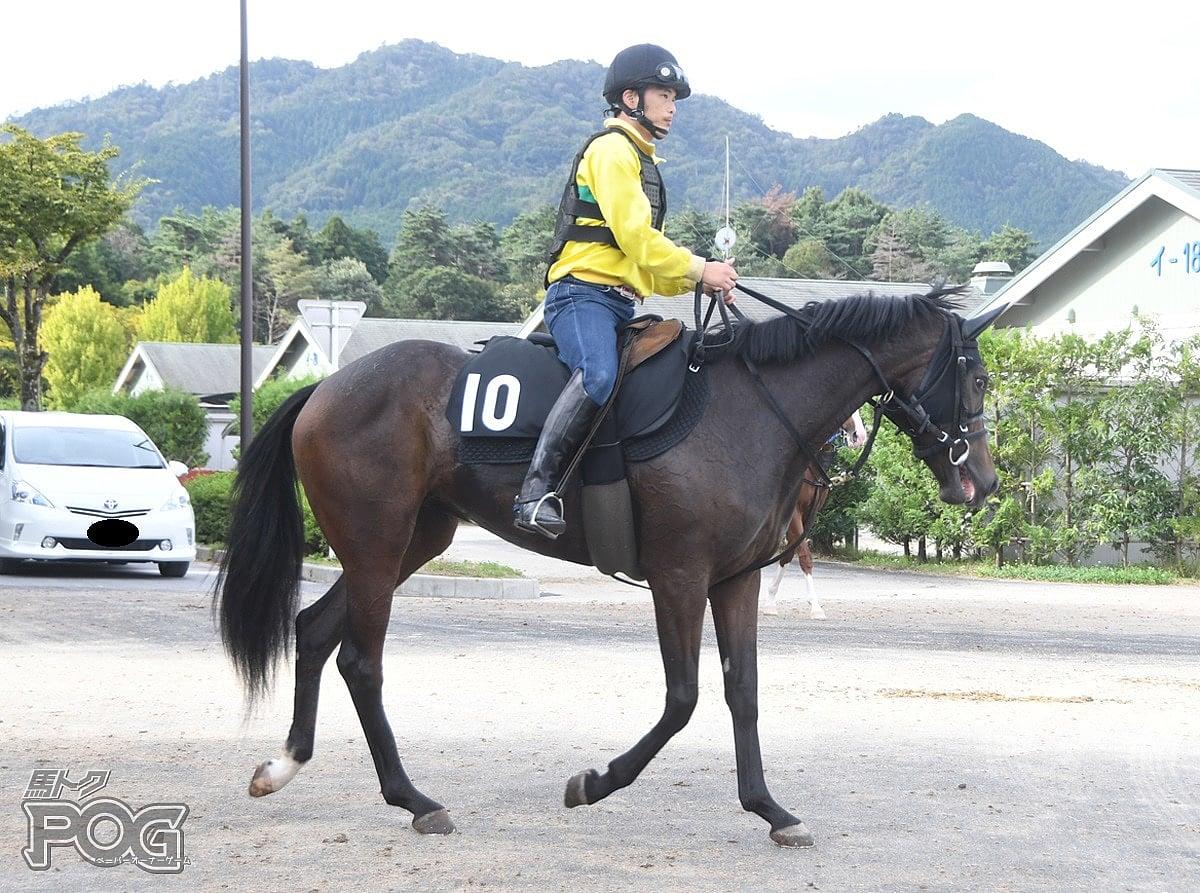 アイファージュリアの馬体写真