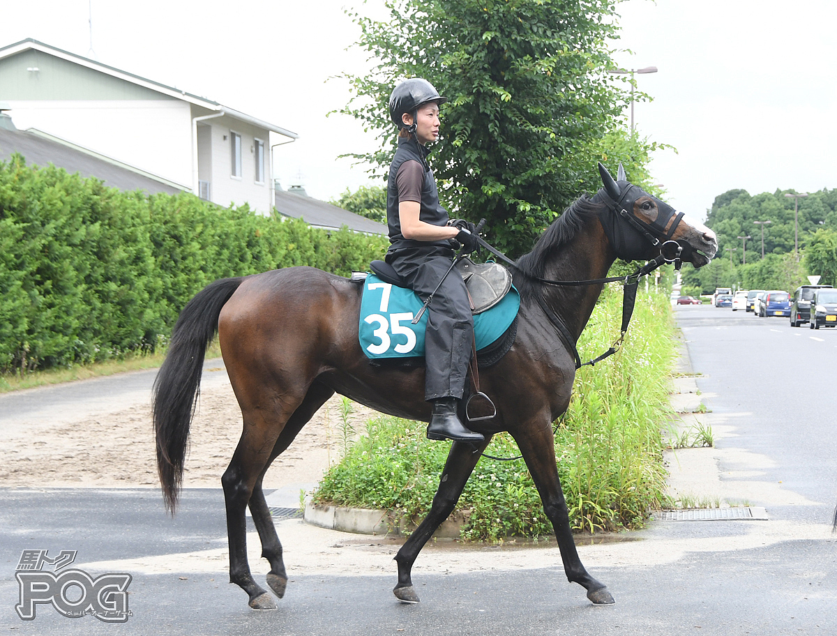 アイファーロマンスの馬体写真