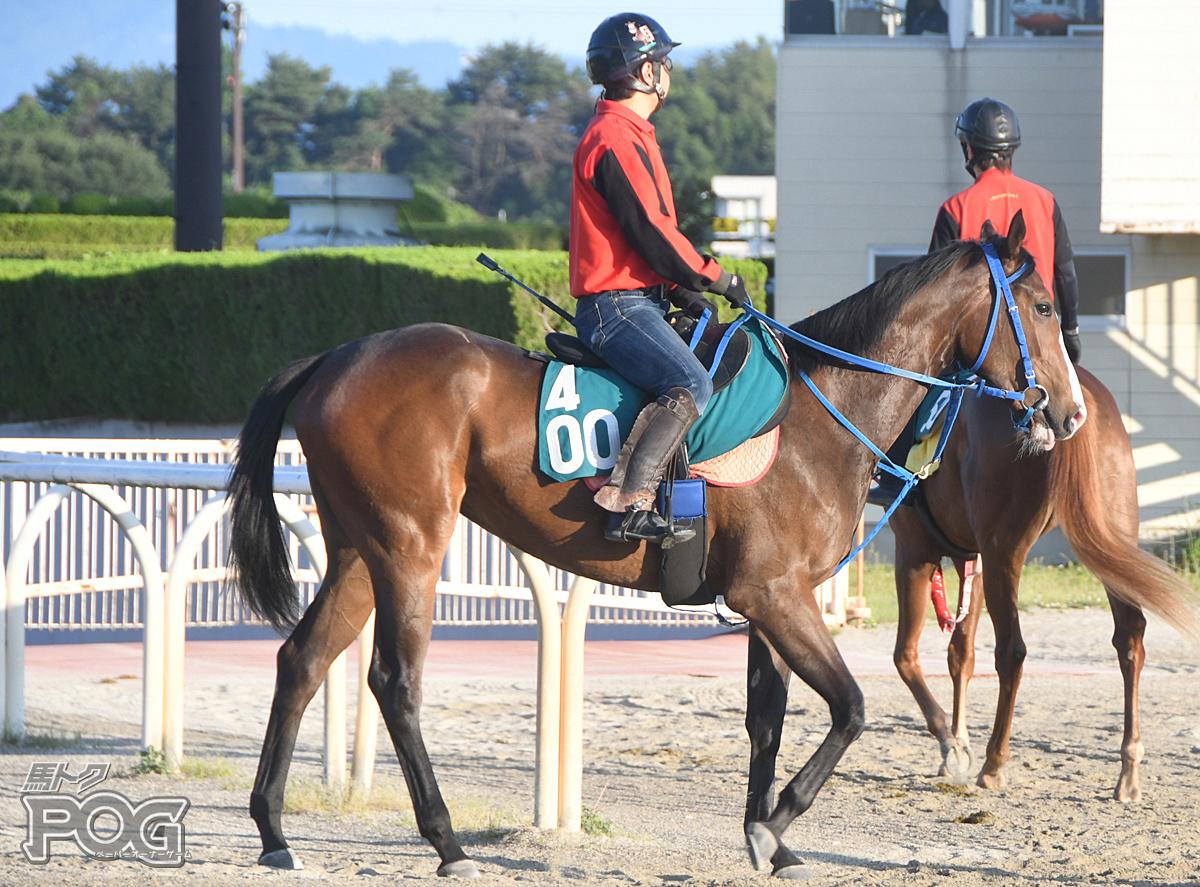 アイファーアピールの馬体写真