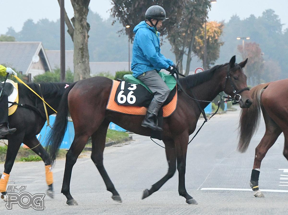 アーバンベストの馬体写真